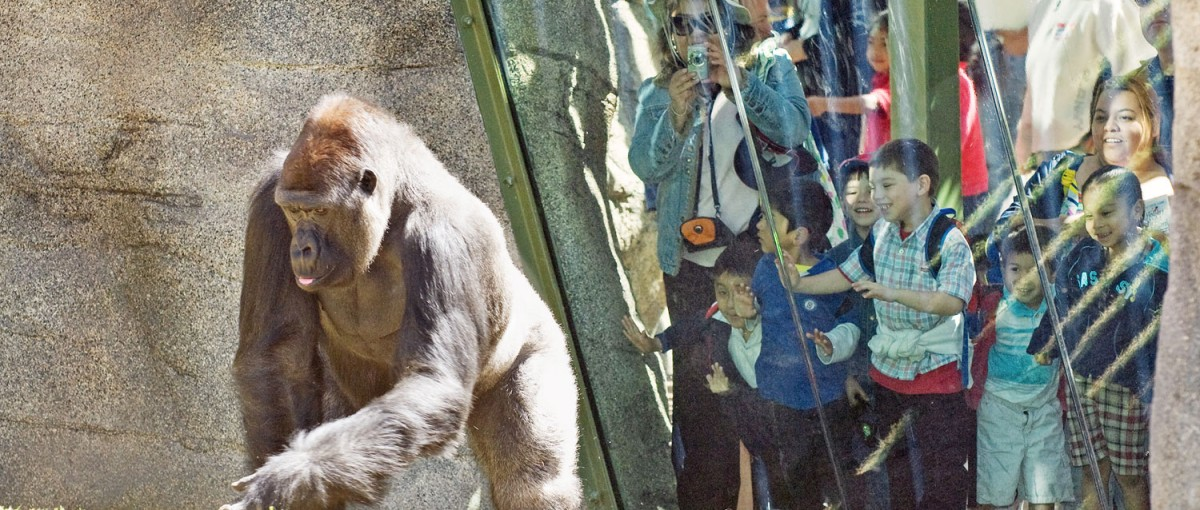 Los Angeles Zoo - Things to do in Los Angeles